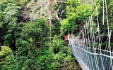 Thumbnail: Essential Guide to Taman Negara