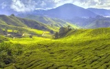 Thumbnail: Essential Guide to Cameron Highlands